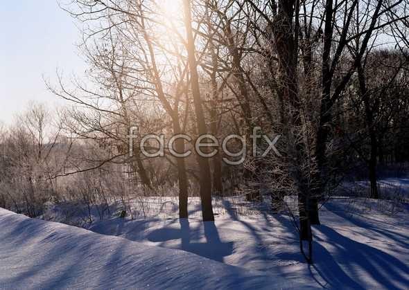 Frozen 360