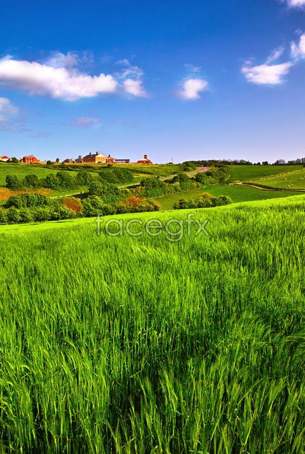 Pastoral landscape picture
