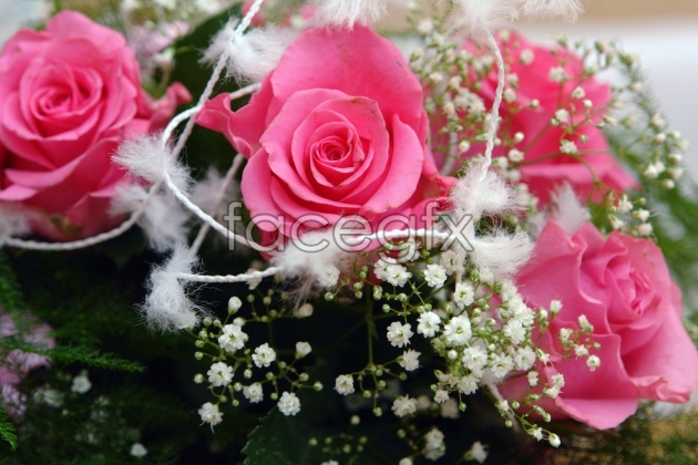 Pink Roses pictures