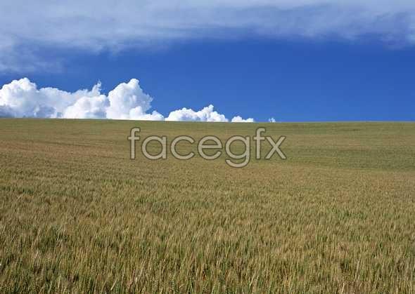 Rural pastoral 159