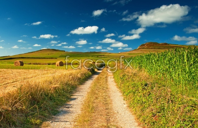 Rural straw HD pictures