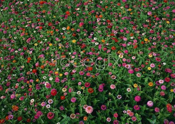 Thousands of flowers and 587