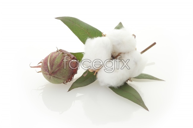 Cotton picture material
