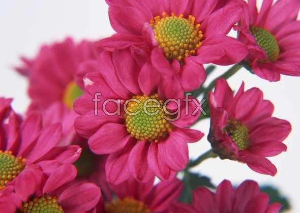 Flowers close-up 123