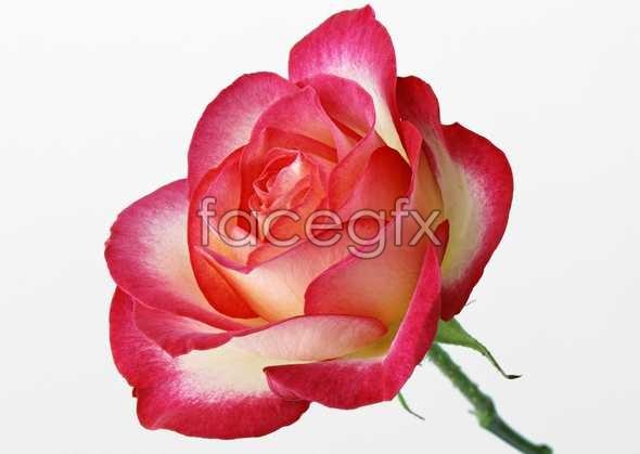 Flowers close-up 401