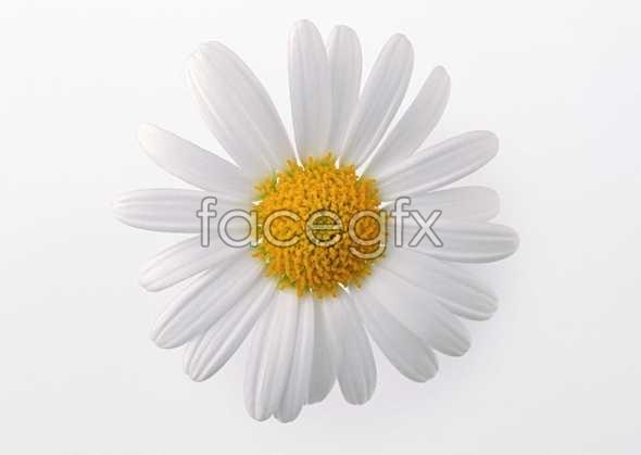 Flowers close-up 422