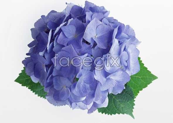 Flowers close-up 439