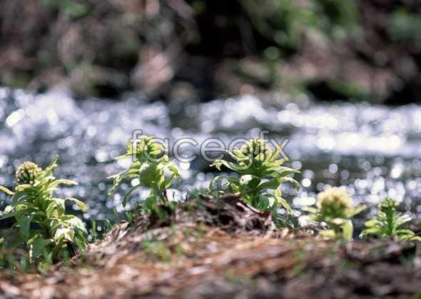 Flowers close-up 585
