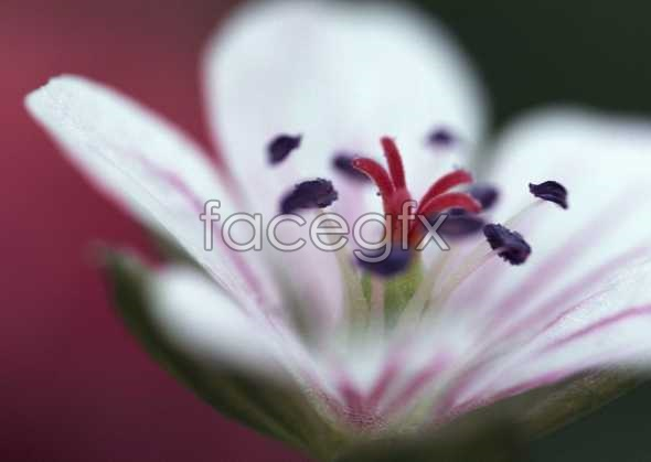 Flowers close-up 627