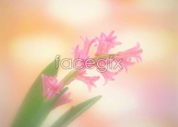 Flowers close-up 888