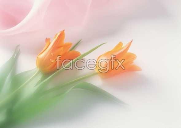 Flowers close-up 909