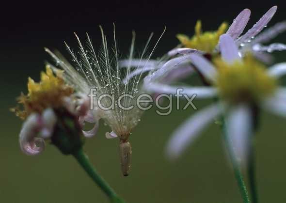 Flowers close-ups 608