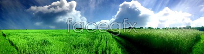 Grass scenery picture