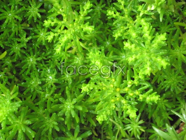 Green Flower material picture