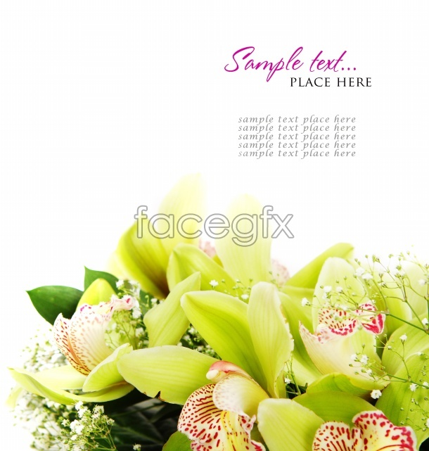 HD flower card picture