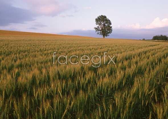 Idyllic country 104