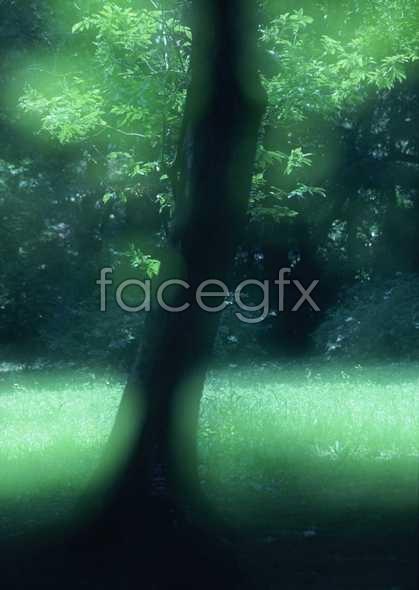 Jungle beauty of 233