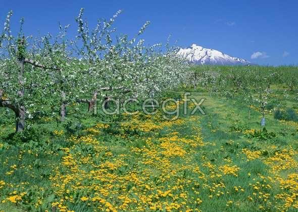 Thousand flower 56