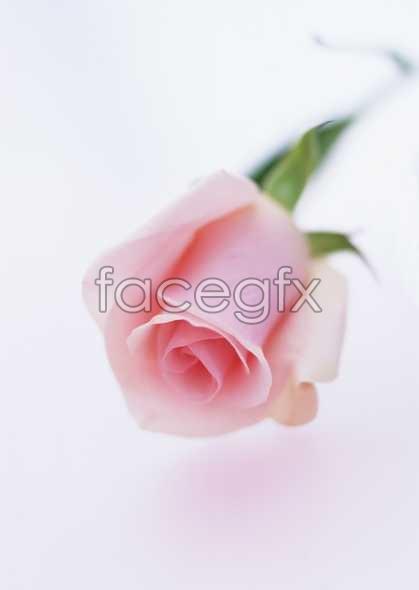 Flowers close-up 1676
