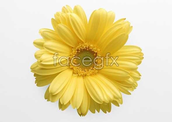 Flowers close-up 420