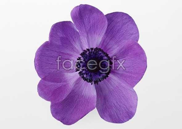 Flowers close-up 442