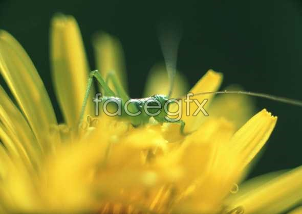Flowers close-up 602