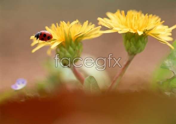 Flowers close-up 613