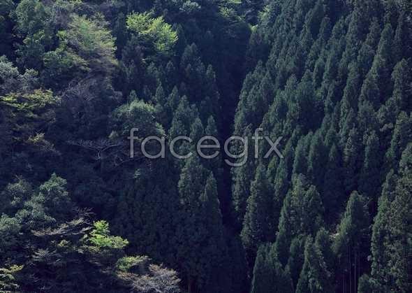 Jungle beauty of 490