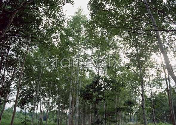 Jungle beauty of 552