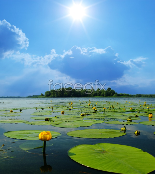 Lotus pond scenic picture