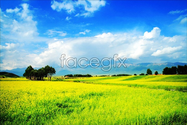Wild flower field landscapes pictures