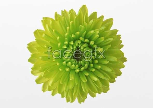 Flowers close-up 468