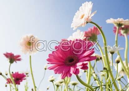 Flowers pictures 2,128