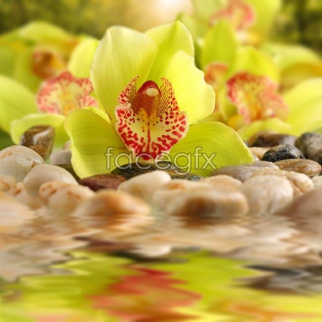 Hi-def yellow flowers