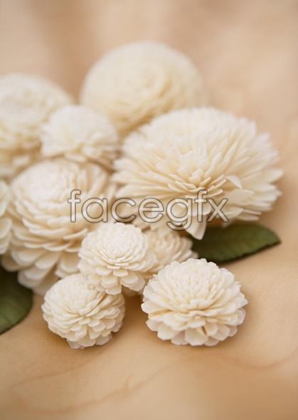 Indoor flower 122