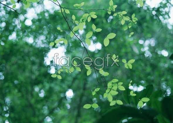 Jungle beauty 108