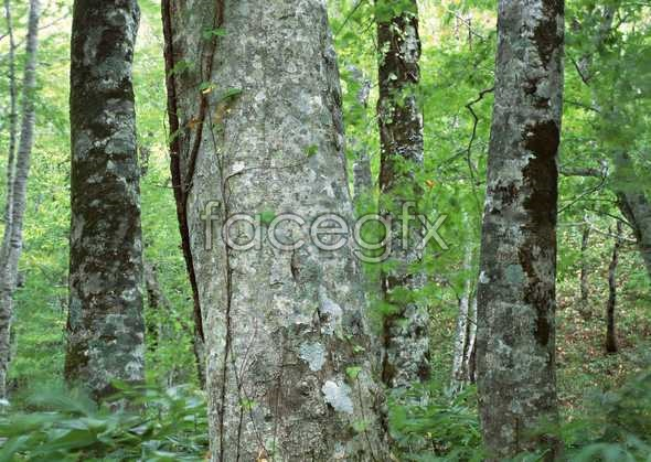 Jungle beauty of 426