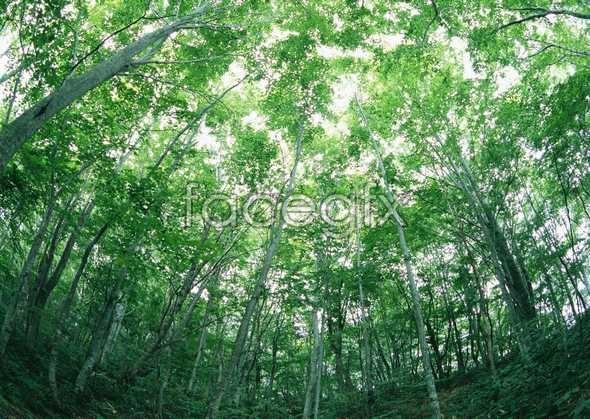 Jungle beauty of 95