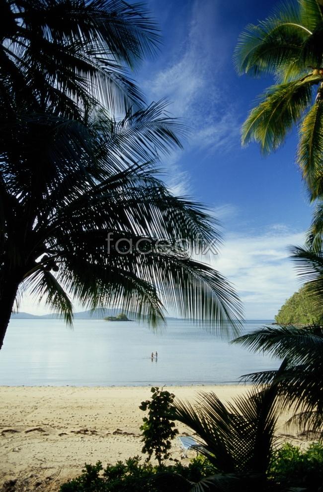 Sanya Beach coconut trees scenery picture