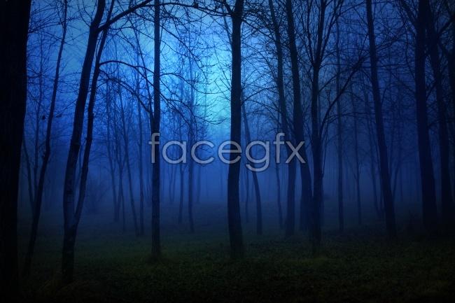 Dark wood picture