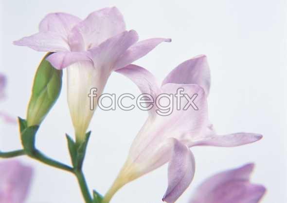 Flowers close-up 124