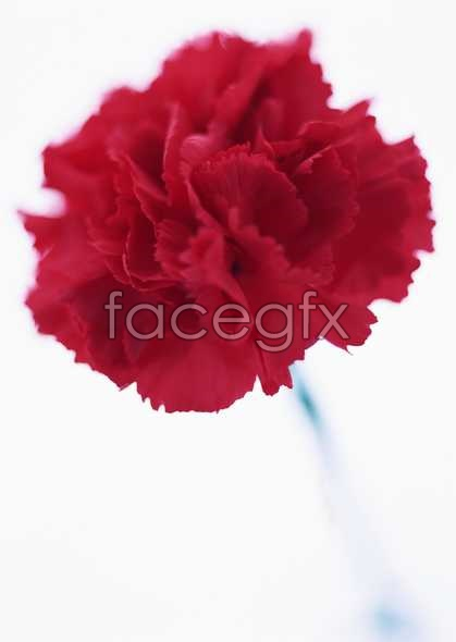 Flowers close-up 1660