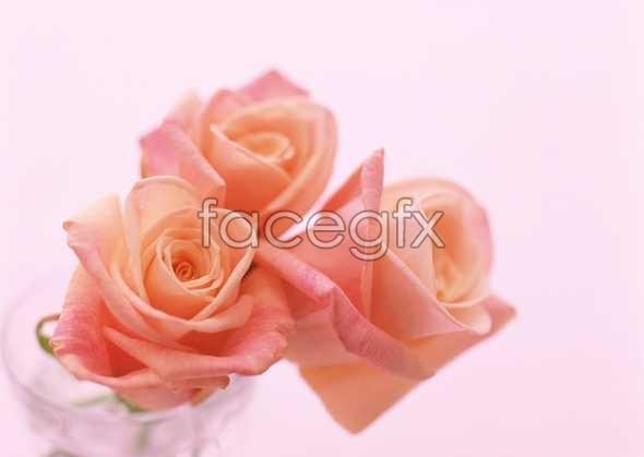 Flowers close-up 1750