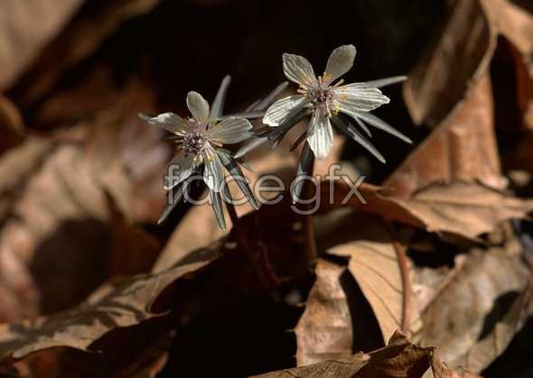 Flowers close-up 664