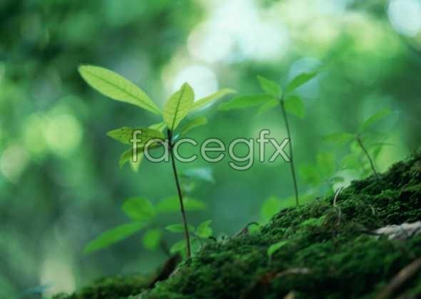 Jungle beauty of 113