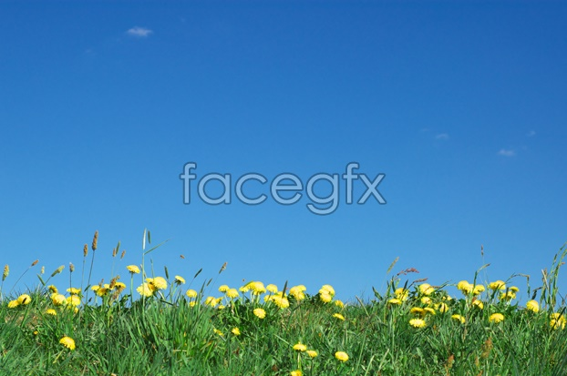 Wildflower pictures in the sky