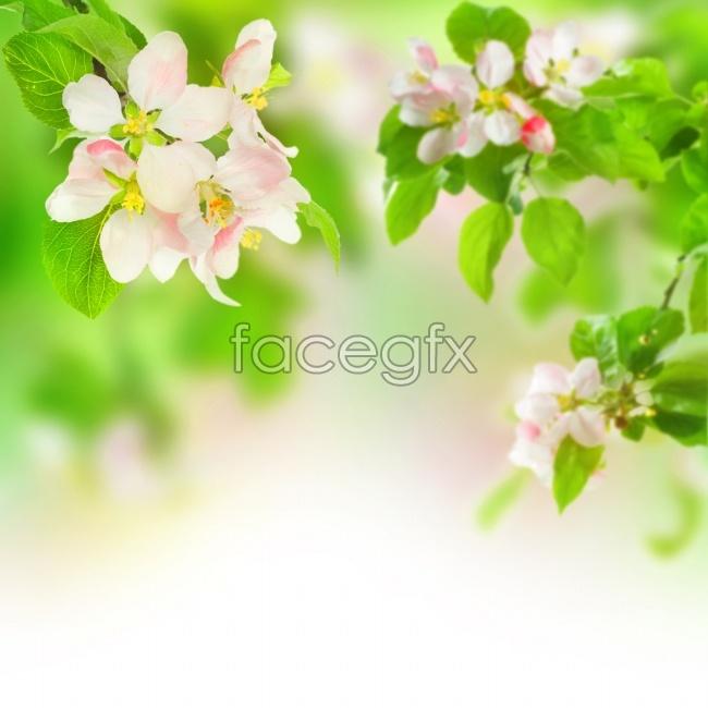 bright green flowers