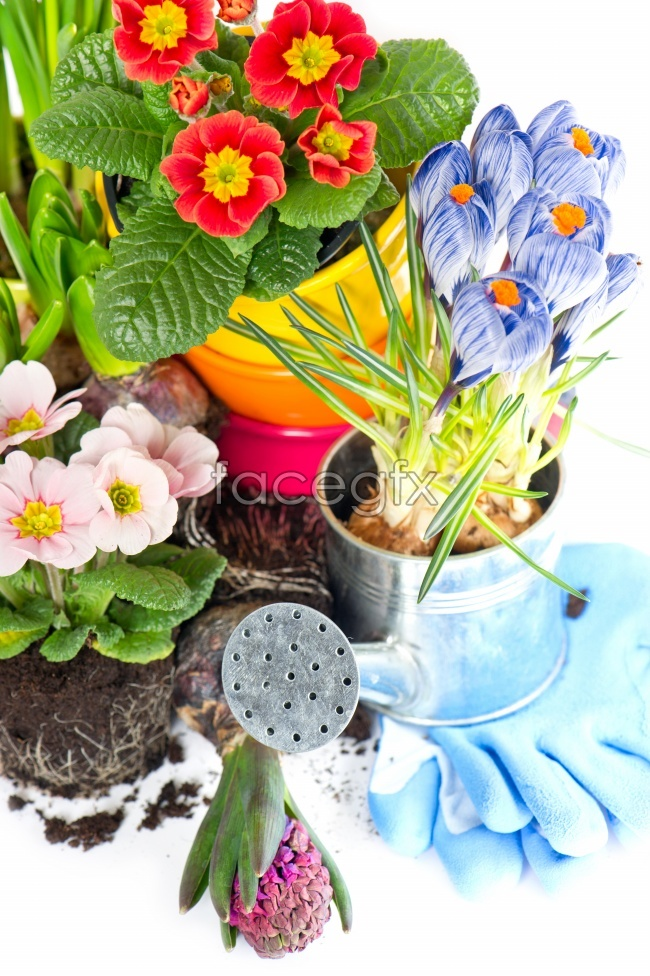 Flower pot high definition pictures