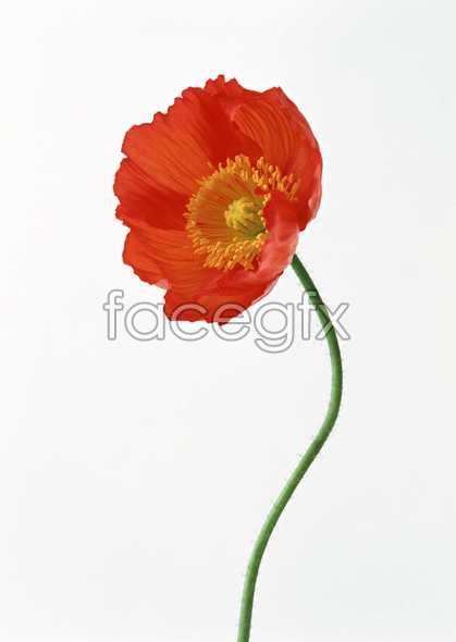 Flowers close-up 1411