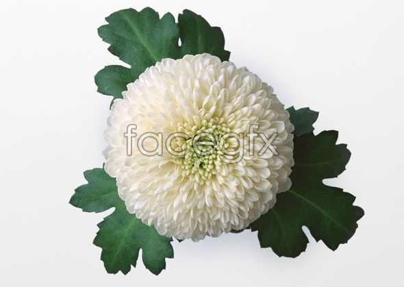 Flowers close-up 465
